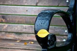 Yellow Leaf Stuck to the Handle