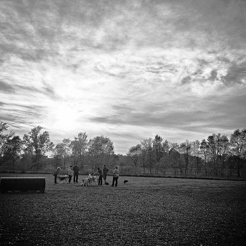 Dusk at the dog park