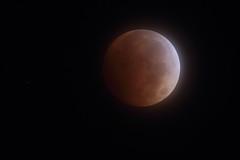 Total Lunar Eclipse - 8 Oct 2014