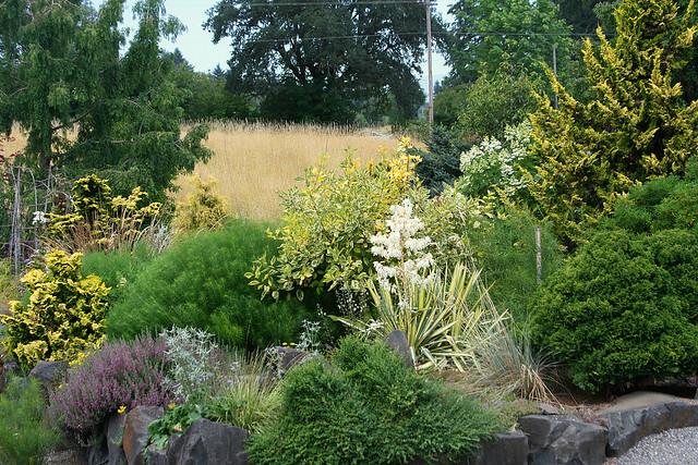 3_yellow_garden