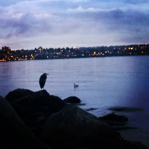 Heron during the Sunset in English Bay, Vancouver BC  . #sunset #englishbay #heron #majestic #stoic #frenweh #wanderlust #travel #foodie #foodporn #vagabond #explorer #traveler #passport #grateful #entrepreneur #travel #networker #vancouver #Canada #bangk
