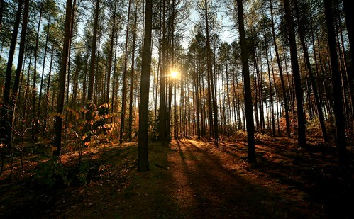 morning trees sun tree forest sunrise canon landscape scenery drohiczyn cesarz marcelxyz