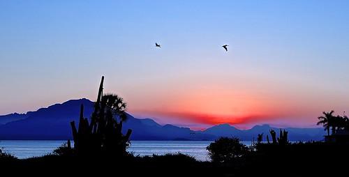 ocean sunset sea pelicans birds sonora sunrise mexico bay bahia sancarlos seaofcortez