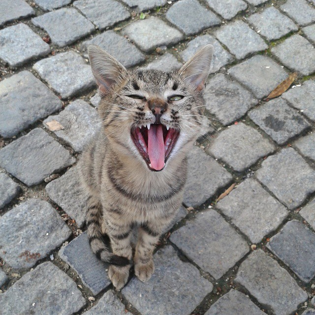 kissa!