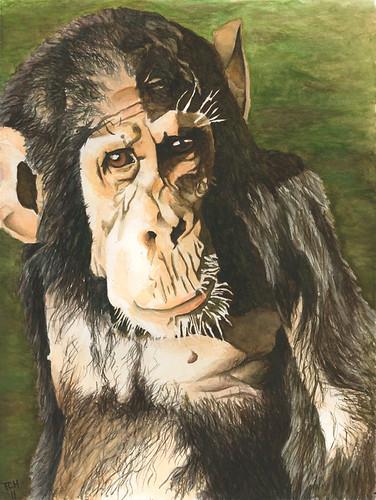 Kathe _ chimp by Cleve Hicks