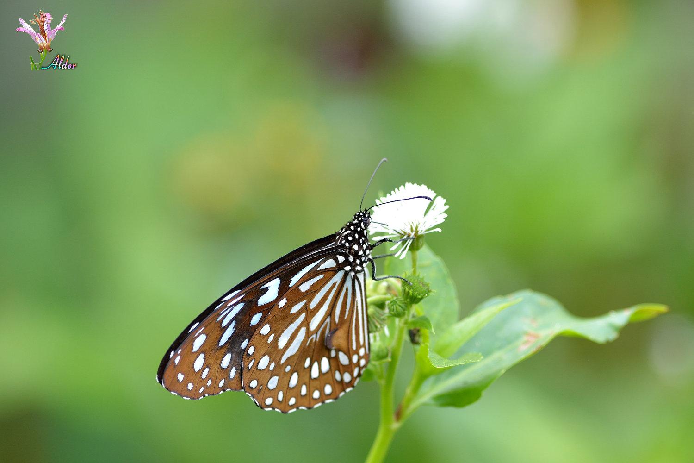 Butterfly_9073