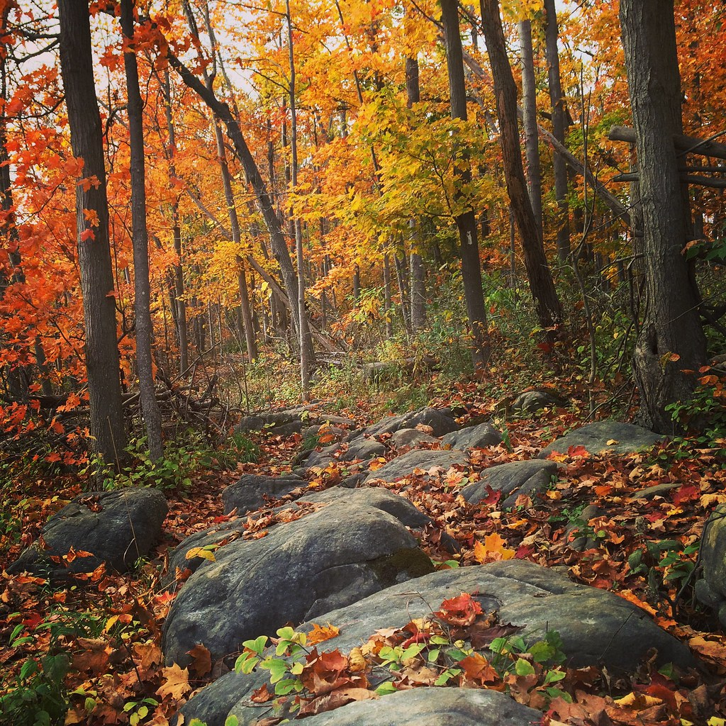 Fall hikes in Ontario - a list of resources for the best trails and timing for fall foliage.