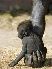 s-Safe-in-his-mothers-hand.-Beautiful.