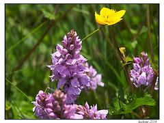 2014-05-30_Chasseradès-Bleymard-0022