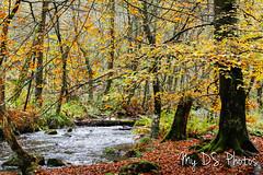 Autumn's color