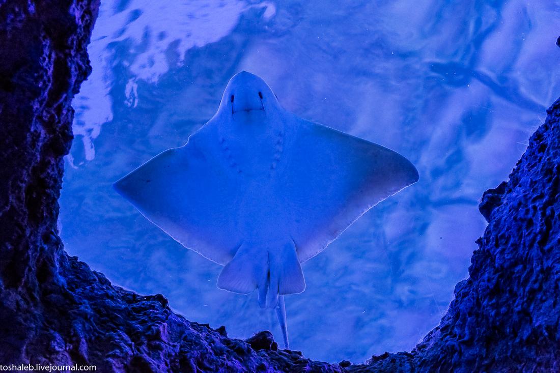 Анталья_аквариум-62