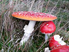 20141025_104611_MushroomInception