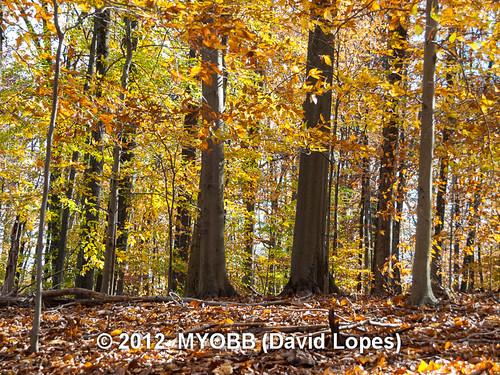 color fall nature wildlife olympus leafs audubon bernardsville newjerseyaudubonsociety theschermanhoffmanwildlifesanctuary
