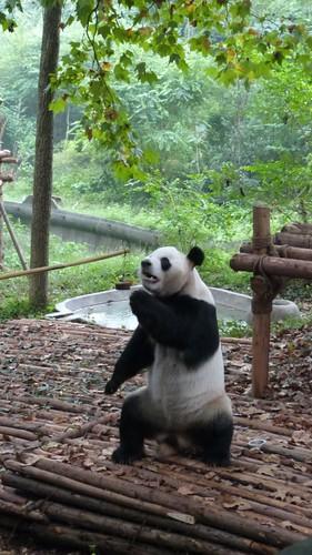 Chengdu-Teil-2-019