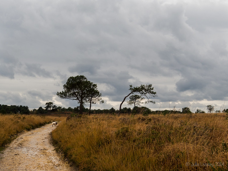 Canford Heath Landscape
