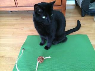 Feline Yogi product review