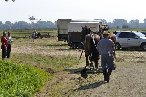 Pferde #4