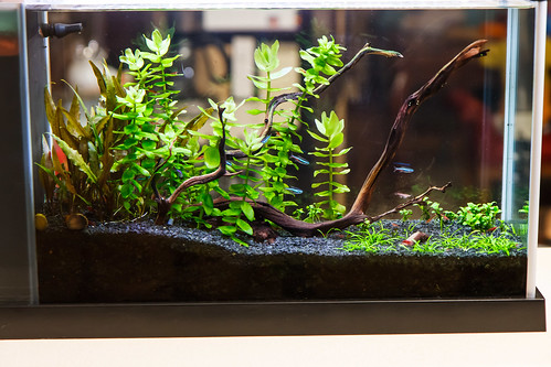 aquarium plants fully transitioned from emerged to immersed