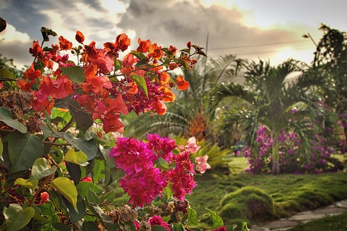 antigua 4star flowers landscape nature outdoors sunsetsunrise caribbean