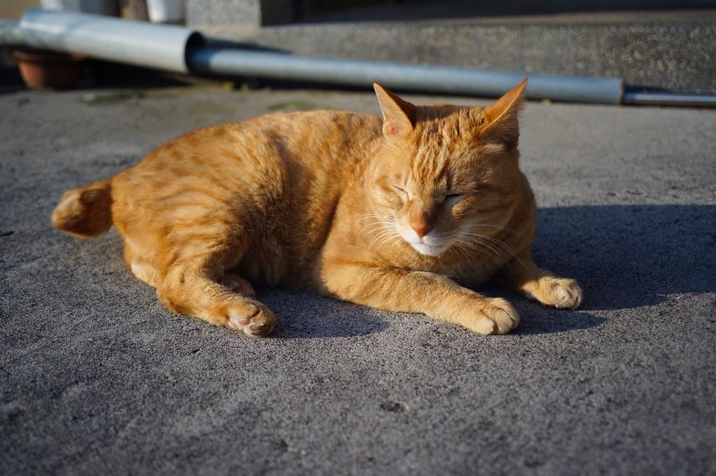 Biogonで猫^^;