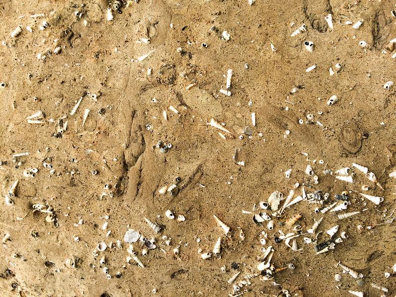 marine-sediments-sandstone-with-fossils-tasmania
