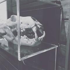#vsco #vscocam #sunset #sunrise #polymerclay #monochrome #monotone #color #blackandwhite  #architecture #building #project #photolife #gradient #raincity #crossroad #halt #rain #seattle #ocean #seattle #old #thembones #skull #bones