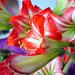 Florecita por antares_86