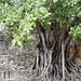 IMG_4261 por ncheng290