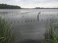Botshol - zwemstrandje op de dijk