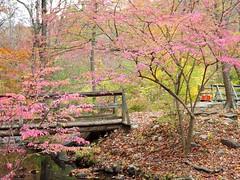 Pink Fall
