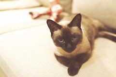 喵咪 kitten