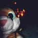 UP! por Light Draw Photography