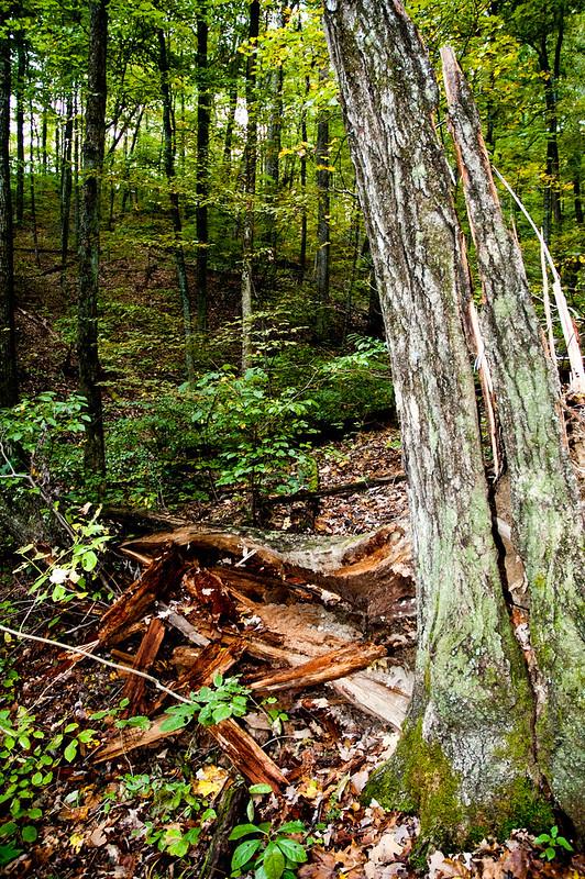 Selma Steele Nature Preserve