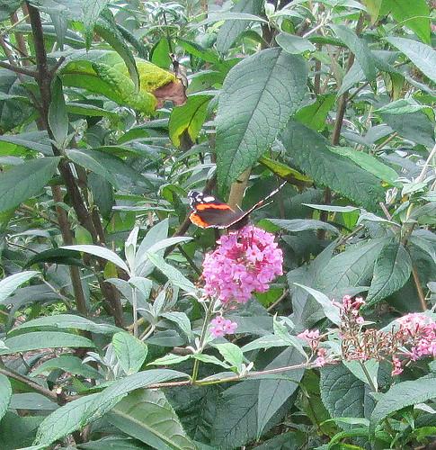 De Kruidhof 10 butterfly 3