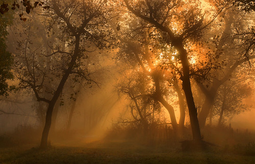 autumn fog sunrise colorado cottonwood riversidepark ptphoto pse12