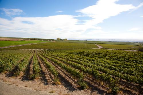 vineyards zillah silverlakewinery