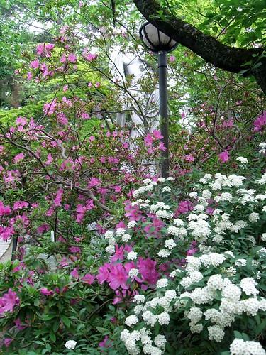 高幡不動尊の花