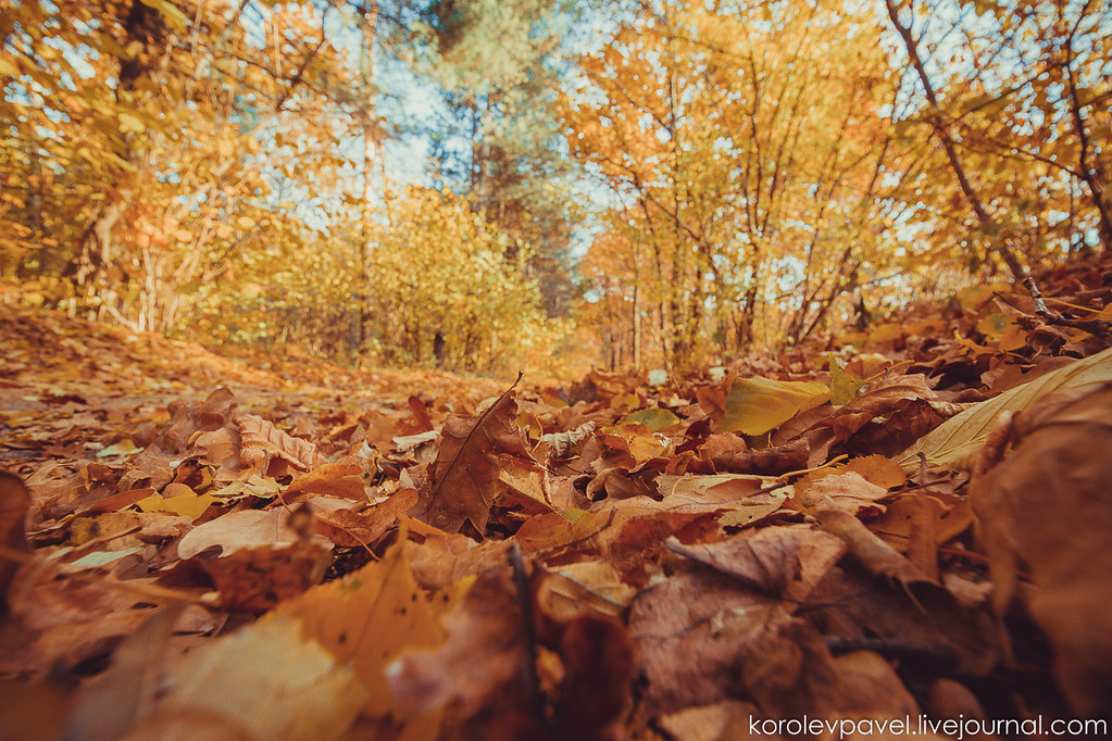 Autumn-049