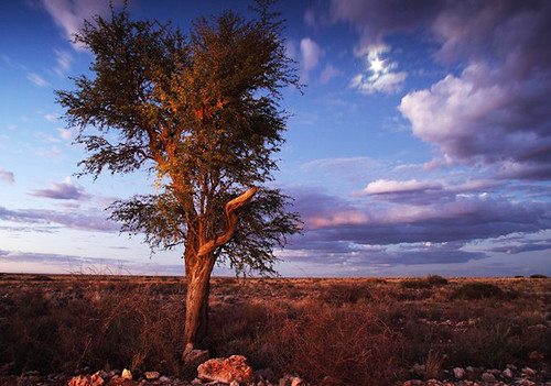 africa sunset wild summer sky plants moon storm nature weather night clouds rural landscape southafrica aftermath flora desert dusk earth farm magenta safari land environment wilderness technique kalahari plantlife