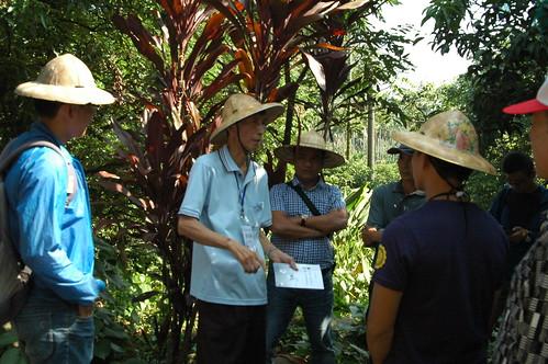 黃信儀在果園講述藥草屬性與療效。