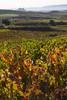 Otoñeando en La Rioja