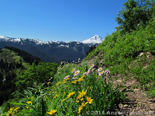 Wildflowers and Mt. Baker from Canyon Ridge, Mt. Baker-Snoqualmie National Forest, Washington