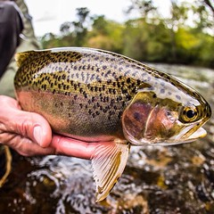 @deadweightfly winner #dwf6 @drewfullerphoto with an awesome shot of balance and perfection. CHECK out @deadweightfly for details on how to enter! #flyfishing #rainbowtrout #catchandrelease #deadweightfly