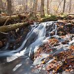 Stream in Shenandoah