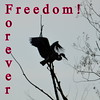Freedom for ever !