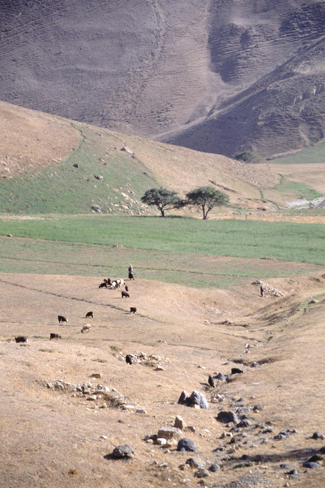 Road trip en Iran - Les petites bergères