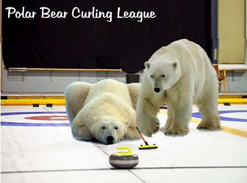 polar bear curling