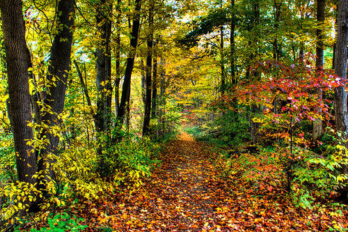 autumn trees mill leaves canon season walking colours path hike trail change grandriver hdr germanwoolenmill