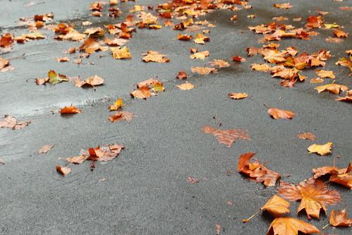 Pioggia e foglie d'autunno