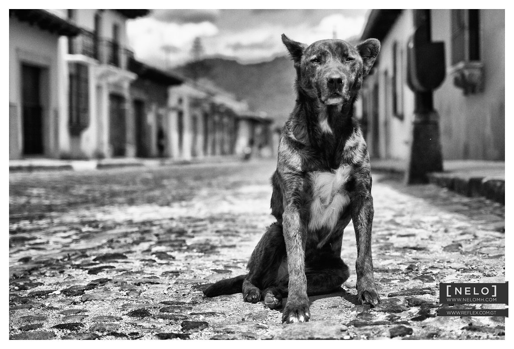 Actitud perra